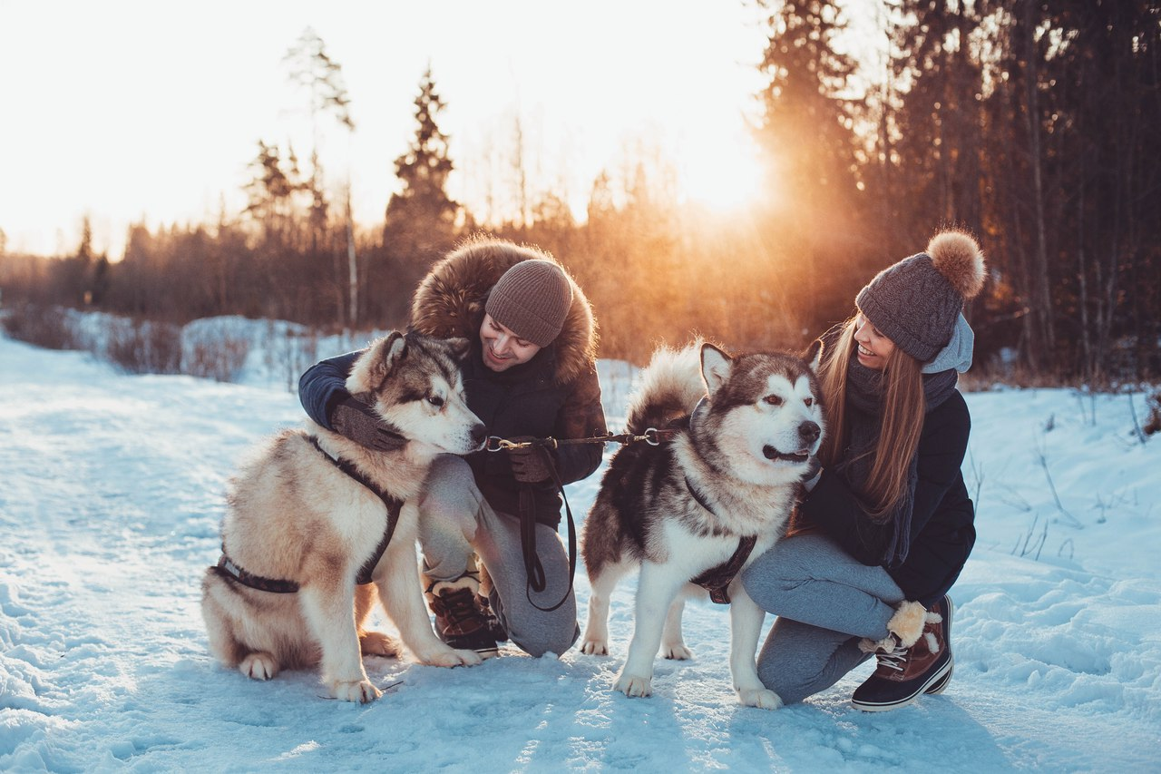 Прогулка на собаках